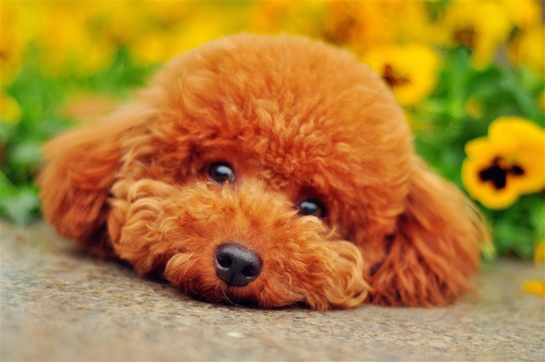 全世界最可爱的狗狗